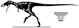 Tarbosaurus - The pieces of IVPP V4878, described as Shanshanosaurus huoyanshanensis
