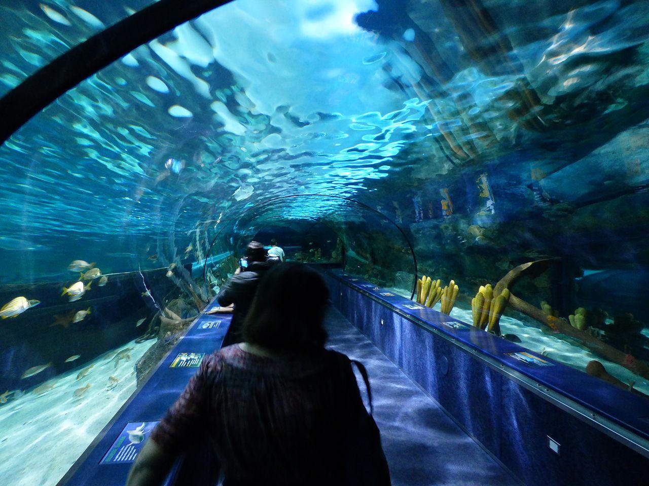 File:Shark Cave Ripley's Aquarium Myrtle Beach.JPG ...