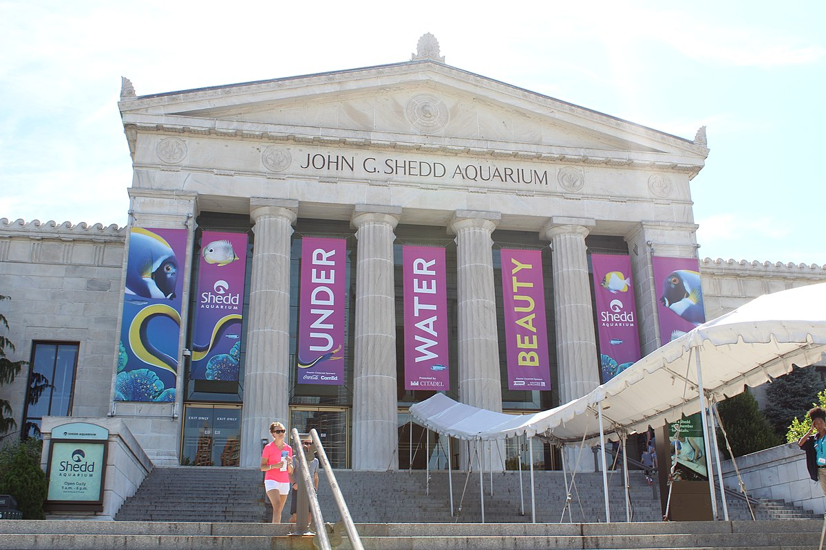 Image result for shedd aquarium