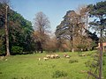 Sheep paddock at Berrington Hall - geograph.org.uk - 1278986.jpg