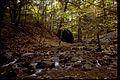 Shenandoah National Park SHEN9185.jpg