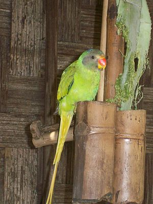 A very cute image of a domesticated parrot in Shillong.