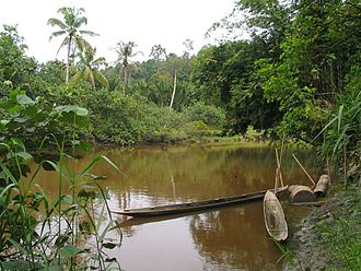 Mentawai Islands Regency - Dugout canoes on a river in Siberut