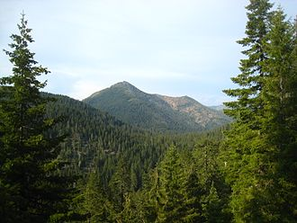 Siskiyou Mountains - Forest in the Siskiyou Mountains in California