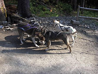 Sled Dog Discovery & Musher's Camp 11.jpg