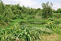 Small pond, East Prawle - geograph.org.uk - 826087.jpg