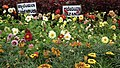 Snap from Lalbagh Flower Show Aug 2013 8384.JPG
