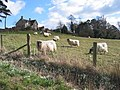 Snowdrops and Hazeland Lodge - geograph.org.uk - 515541.jpg