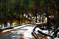Snowy Road Color Enhanced DCEN-8.jpg