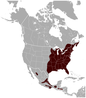 Southern flying squirrel Glaucomys volans distribution map.png
