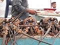 Spiny Lobsters-84.jpg