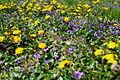 Spring-grass-wildflowers - West Virginia - ForestWander.jpg