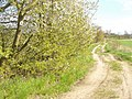 Stahnsdorf - Gruener Weg - geo.hlipp.de - 35341.jpg