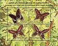 Stamp of India - 2008 - Colnect 157952 - Andaman Mormon Papilio mayo Andaman Clubtail Pachliopta.jpeg