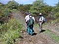 Starr-020422-0063-Zinnia peruviana-fenceline road with Art and crew-Puu o Kali-Maui (24180660559).jpg