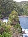 Starr-050405-5623-Schinus terebinthifolius-habitat-Keopuka-Maui (24446935970).jpg