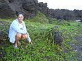 Starr 030716-0082 Jacquemontia ovalifolia subsp. sandwicensis.jpg