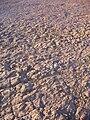 Starr 050208-3877 Eragrostis variabilis.jpg