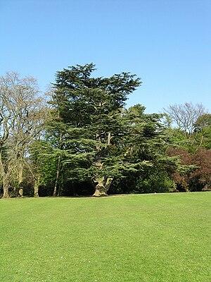 Stewart Park, Middlesbrough - Image: Stewart park arboretum 800
