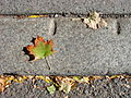 Still Life with Maple Leaf and Curbside - Spokane WA - USA.jpg