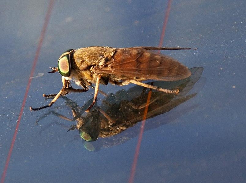 Strange Fly 1