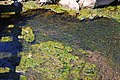 Streambed of Spring Run.jpg