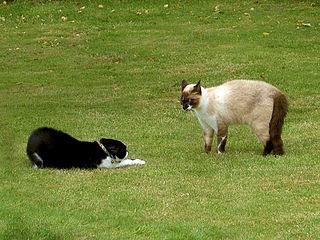Lorsqu'un chat est agressé dans CHAT 320px-Submissive_cat