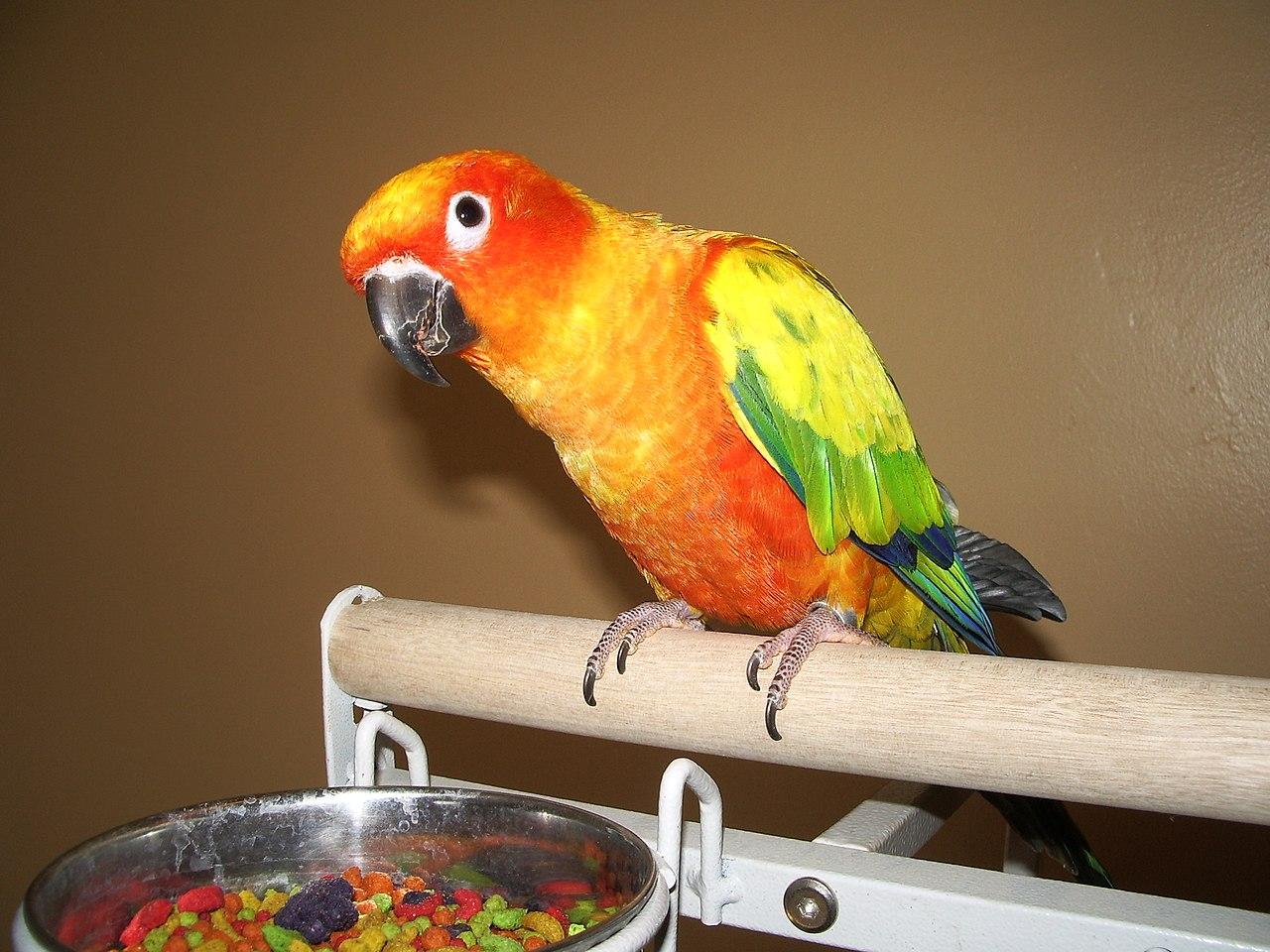 Pet Bird Food Recipes