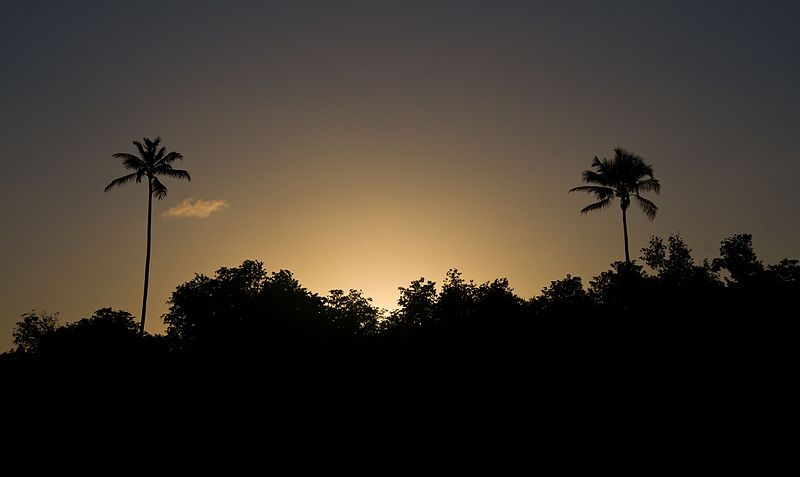 File:Sunset and Palms - panoramio.jpg
