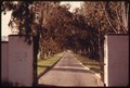 TREES LINE A PRIVATE DRIVEWAY OFF MULHOLLAND DRIVE IN THE SANTA MONICA MOUNTAINS NEAR MALIBU, CALIFORNIA, WHICH IS... - NARA - 557555.tif
