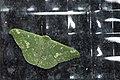 Tanaorhinus kina flavinfra (42654894775).jpg