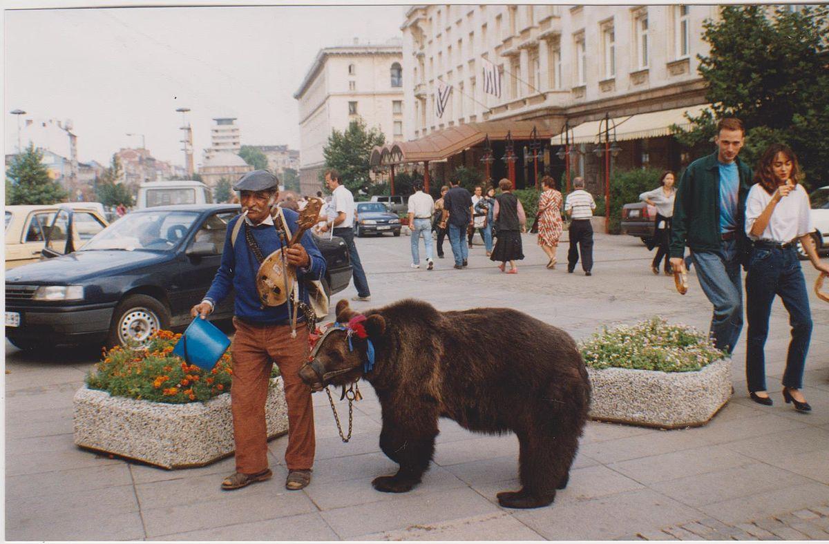 Αποτέλεσμα εικόνας για αρκουδιάρης