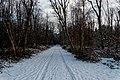 Texel - Bolgrasweg - Winterview SSE.jpg