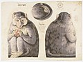 Textile, Jocko, 1892 (CH 18452181).jpg