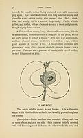 The Apple and pear as vintage fruits (Page 98) BHL6364605.jpg