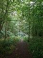 The Chalkland Way through Pocklington Wood - geograph.org.uk - 1416945.jpg