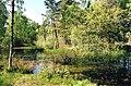 The Culbin Duck Pond - geograph.org.uk - 13022.jpg