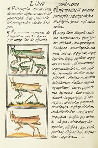 The Florentine Codex- Locusts.tif