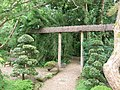 The Japanese Garden at St Mawgan - geograph.org.uk - 1422517.jpg