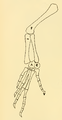 The Osteology of the Reptiles-204 jhg jhb rft 7u8i.png