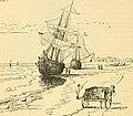 The Pine-tree coast (1891) (14756593236).jpg