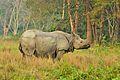 The Rhino.jpg
