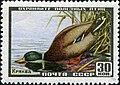 The Soviet Union 1957 CPA 1991 stamp (Mallard).jpg