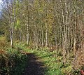 The Thames Path and riverside woodland - geograph.org.uk - 610987.jpg