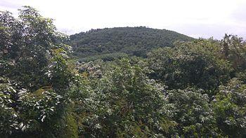 The hill of ayurveda.jpg
