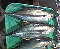 Thunnus albacares Philippine Market 01.jpg