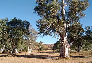 Todd River - The dry riverbed of the Todd River