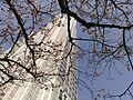 Tokyo Shinjuku Japan 新宿. Sakura blossom - panoramio.jpg