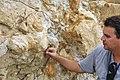 Triceratops dinosaur footprint on underside of vertically tilted sandstone bed (Laramie Formation, upper Upper Cretaceous; Parfet Prehistoric Preserve, Golden, Colorado, USA) (15894268491).jpg