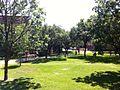Trinity Univ Campus Lawns.JPG